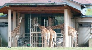 Однажды в московском зоопарке