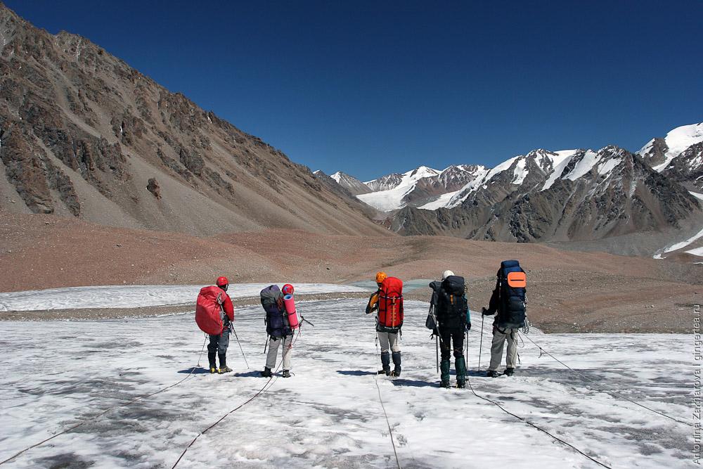 горные туристы в связках идут по леднику в Киргизии