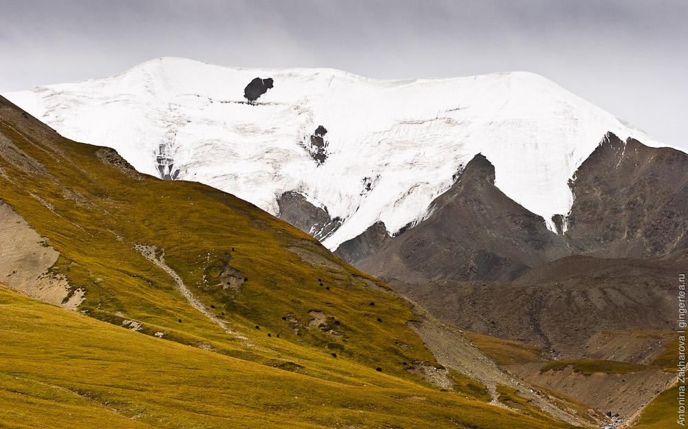 яки в горах Цинхая, yaks in Qinghai mountains