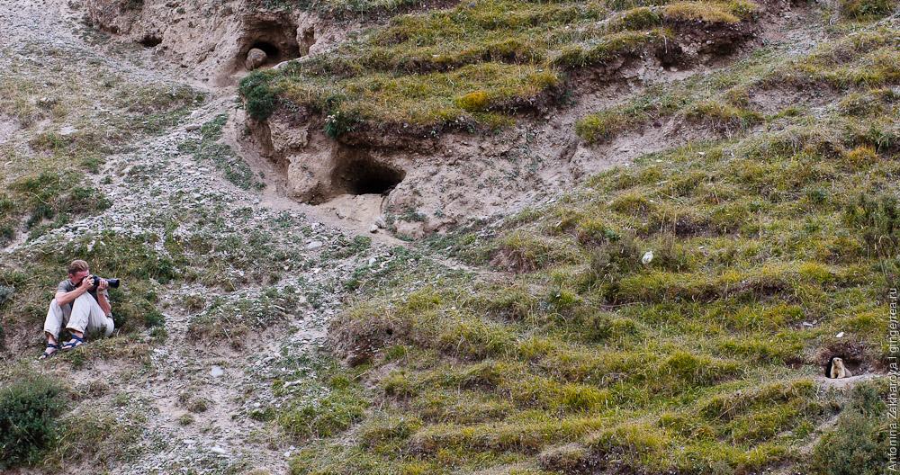 фотографирование сурков, taking a picture of a marmot