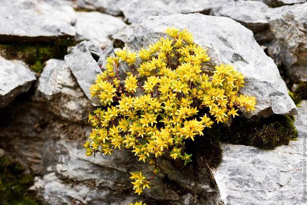 цветы в Сычуани, Sichuan flowers