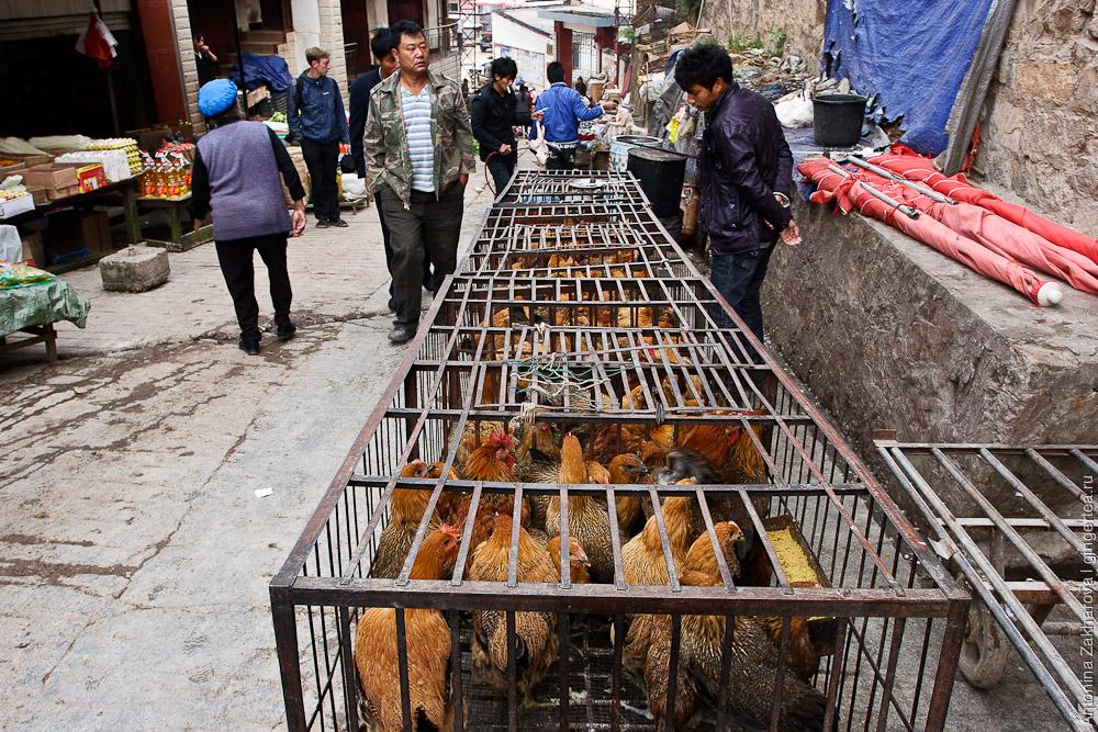 Как убивают куриц в Китае
