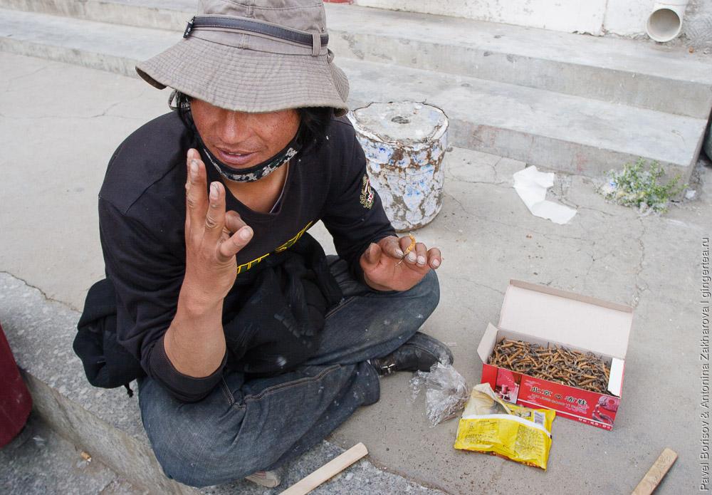 тибетец показывает цену на пкордицепс китайский, ярцагумбу, ярсагумбу
