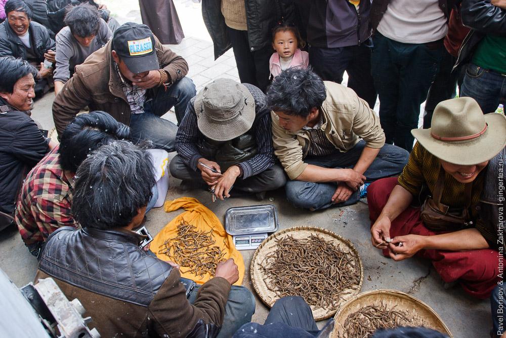 тибетцы покупают кордицепс китайский