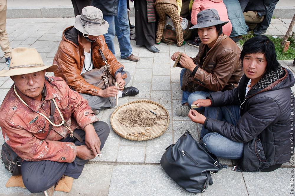 кордицепс китайский, ярцагумба, ярсагумба в Китае и Тибете