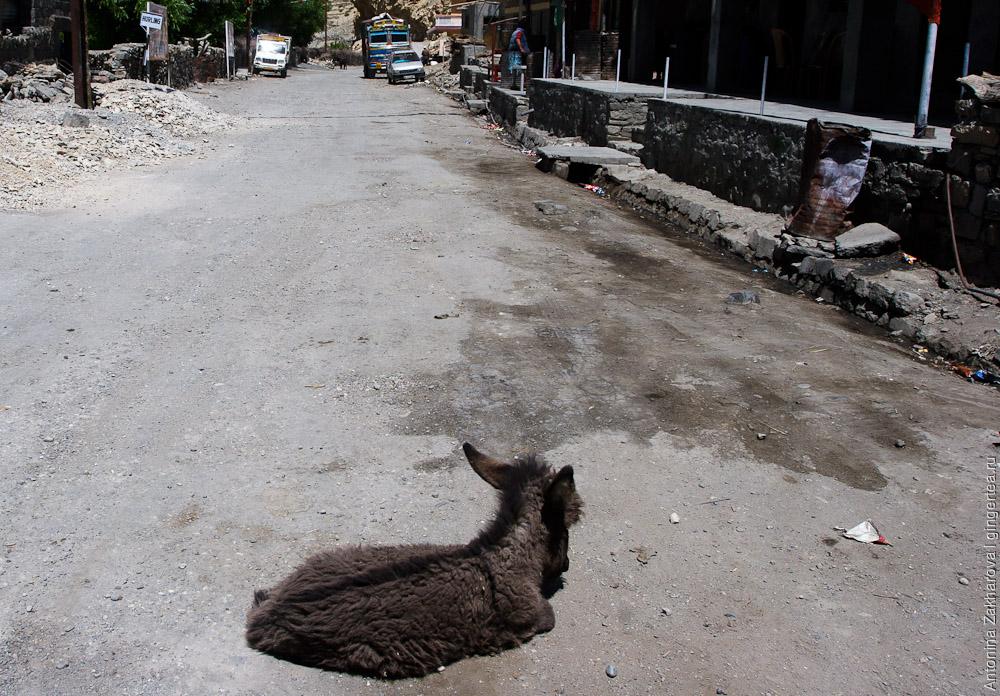 осел, donkey