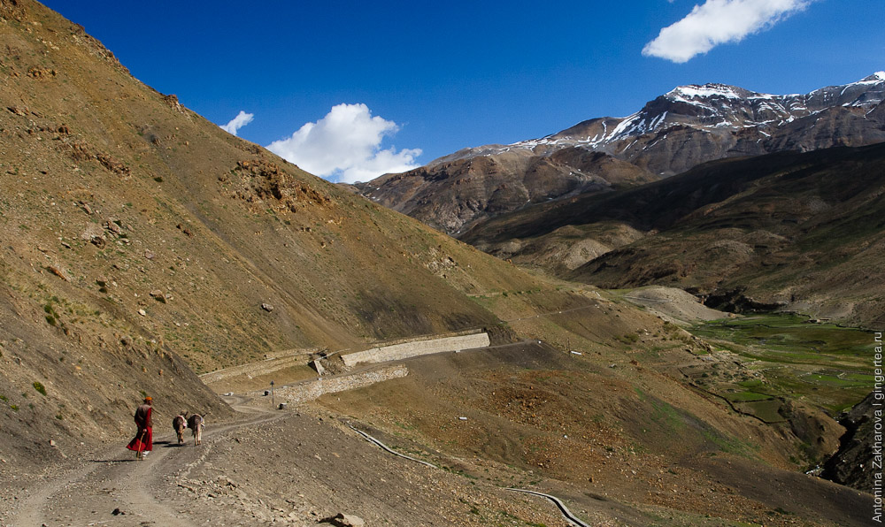 монах и ослики в Спити, monk and donkeys in Spiti