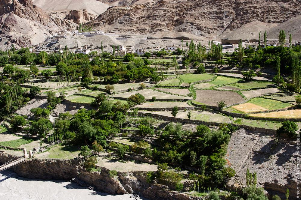 деревни, окруженная абрикосовыми садами, в долине Инда