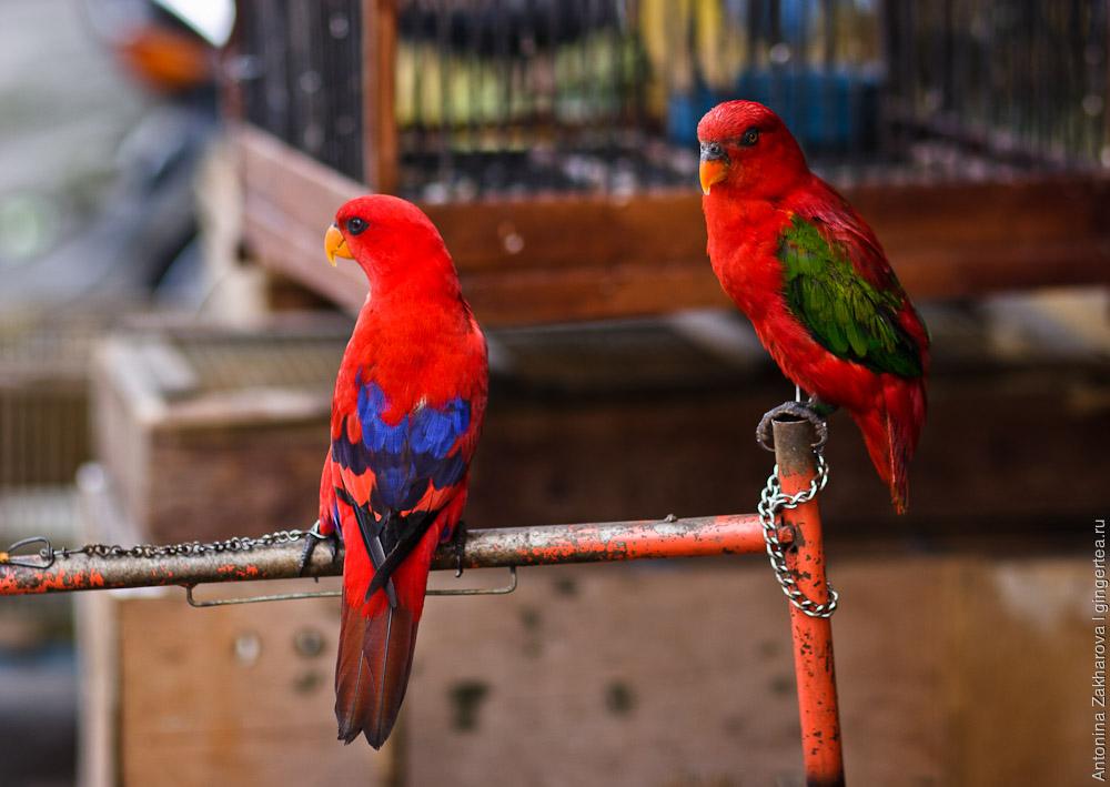 Как продают животных на птичьем рынке в Денпасаре