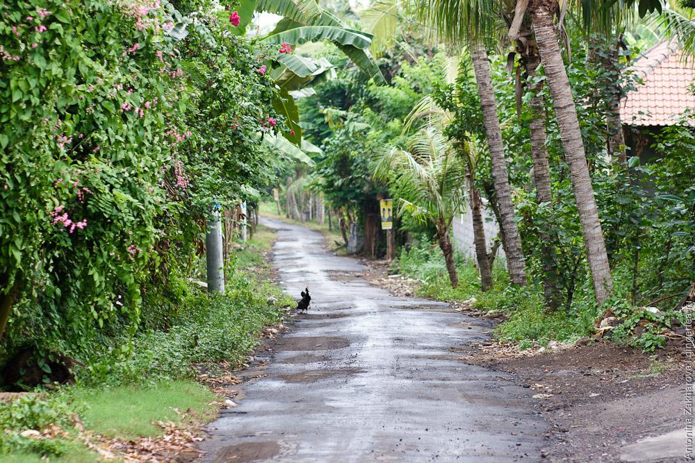Фотографии с острова Бали