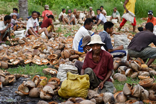 Новый год под пальмами. Репортаж с кокосовой фабрики