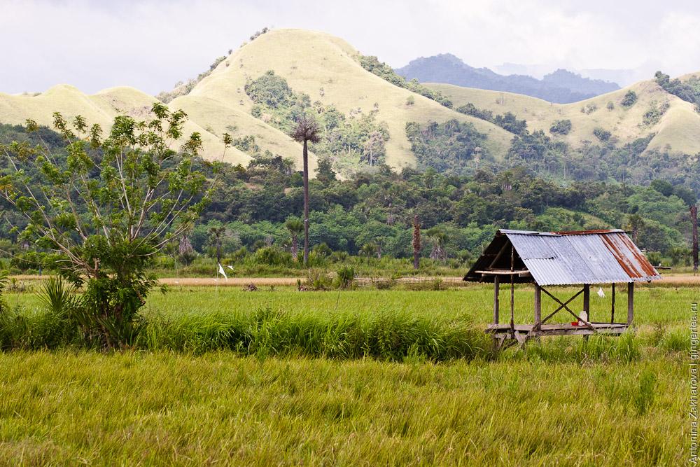 рисовое поле с навесом, a shelter on a rice field