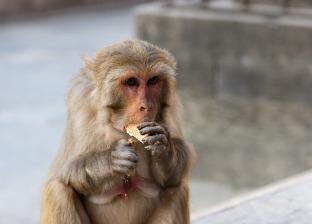 Катманду и обезьяны