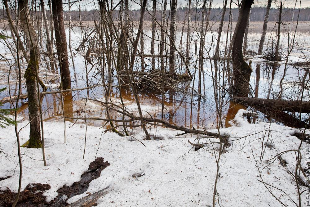 половодье на реке Киржач