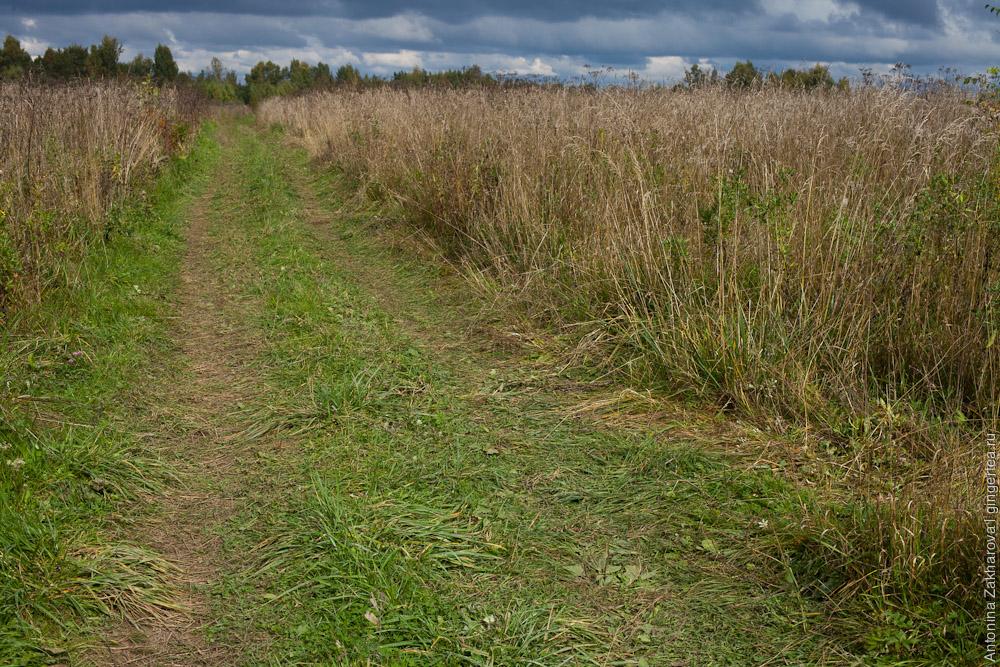 поле в Тверской области