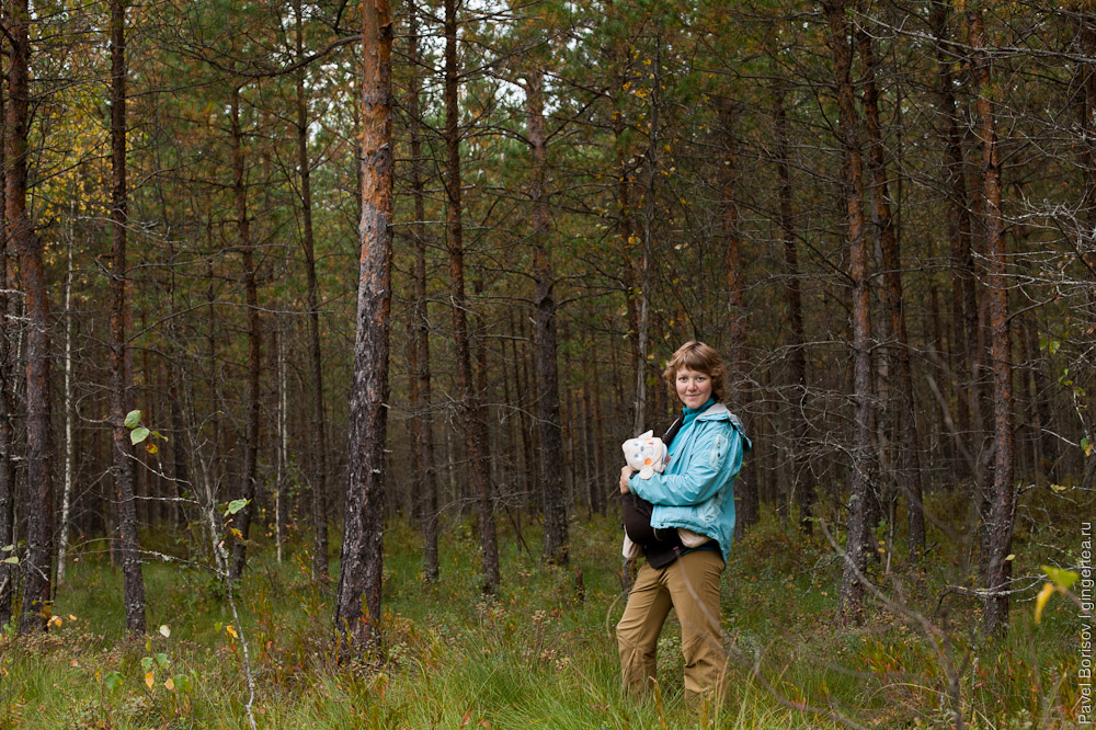 лес в Тверской области