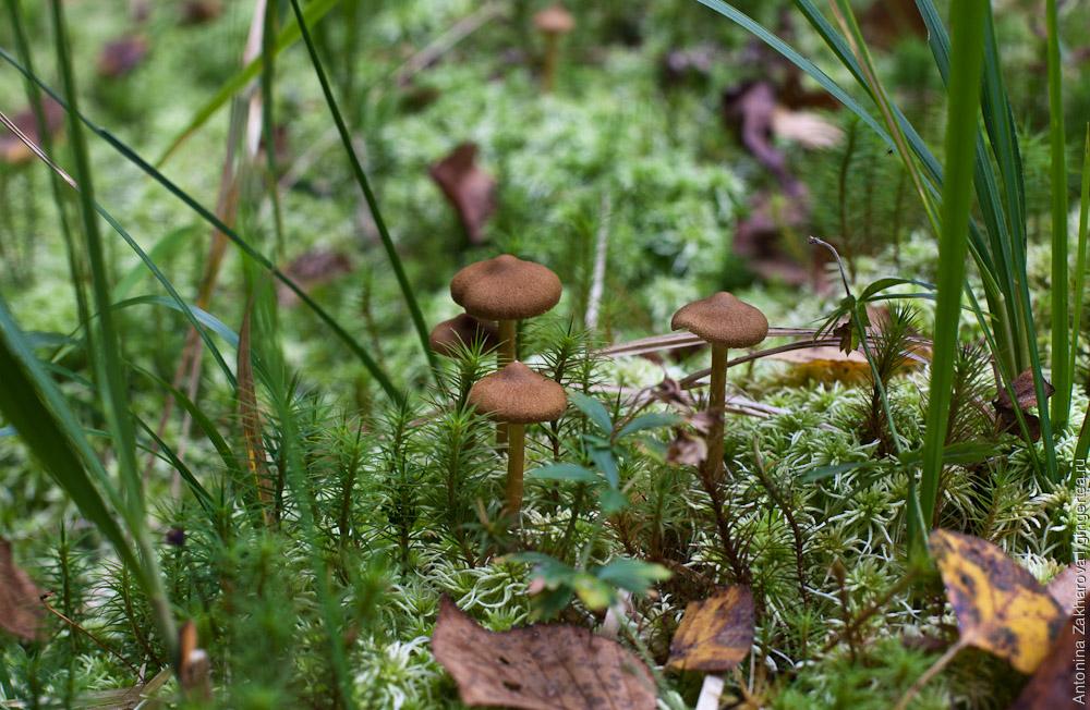 грибы на болоте в Тверской области