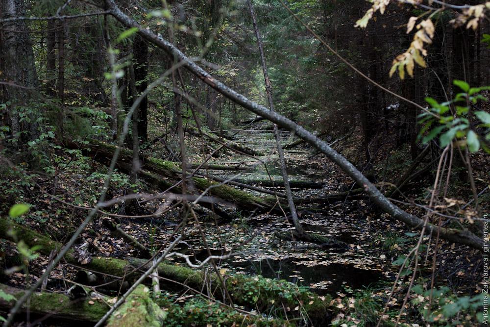 канал в лесу в Тверской области