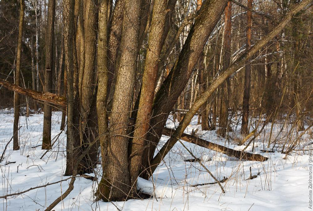 лыжня 41 км - Донино