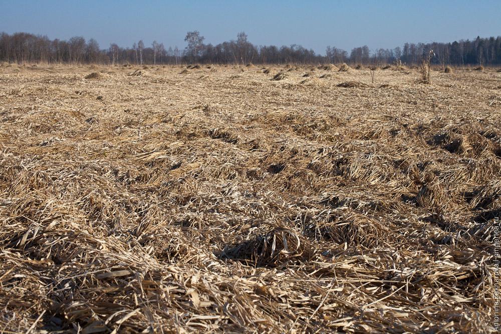 поле у реки Киржач