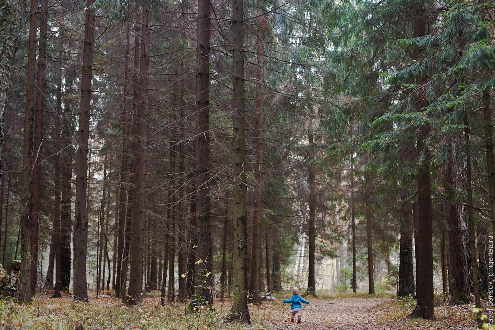 в лесу с маленьким ребенком