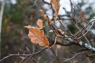 Лесной выезд 10-12 октября 2014: Ямуга