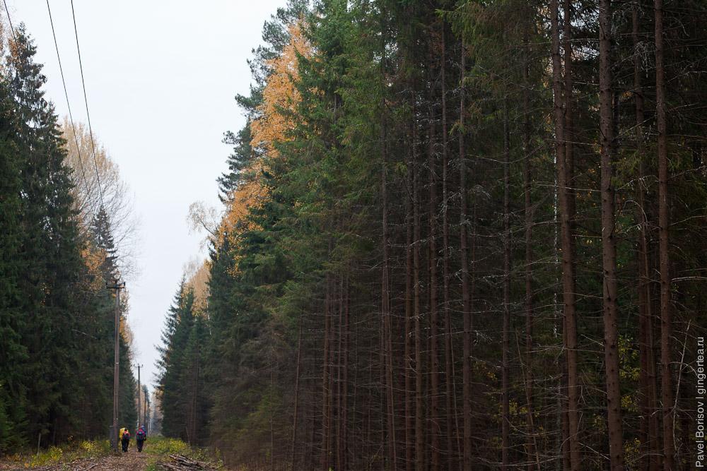 сбор в лесу