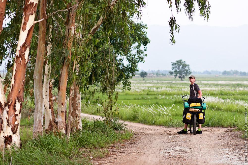 велопоход в Таиланде, велосипедист у рисового поля