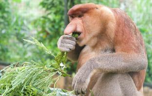 Кто есть кто в джунглях. Животные острова Борнео
