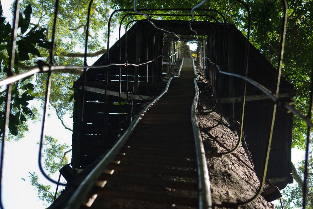 плаформа на дереве в долине Данум, Danum valley tree platform