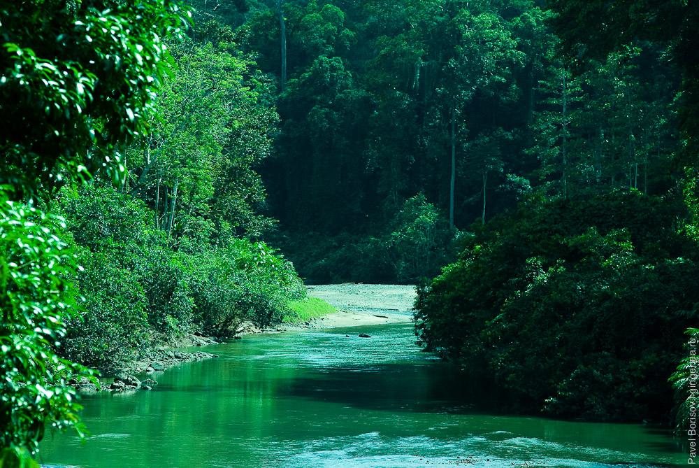 долина Данум, приток реки Сегама Segama tributaries Danum valley