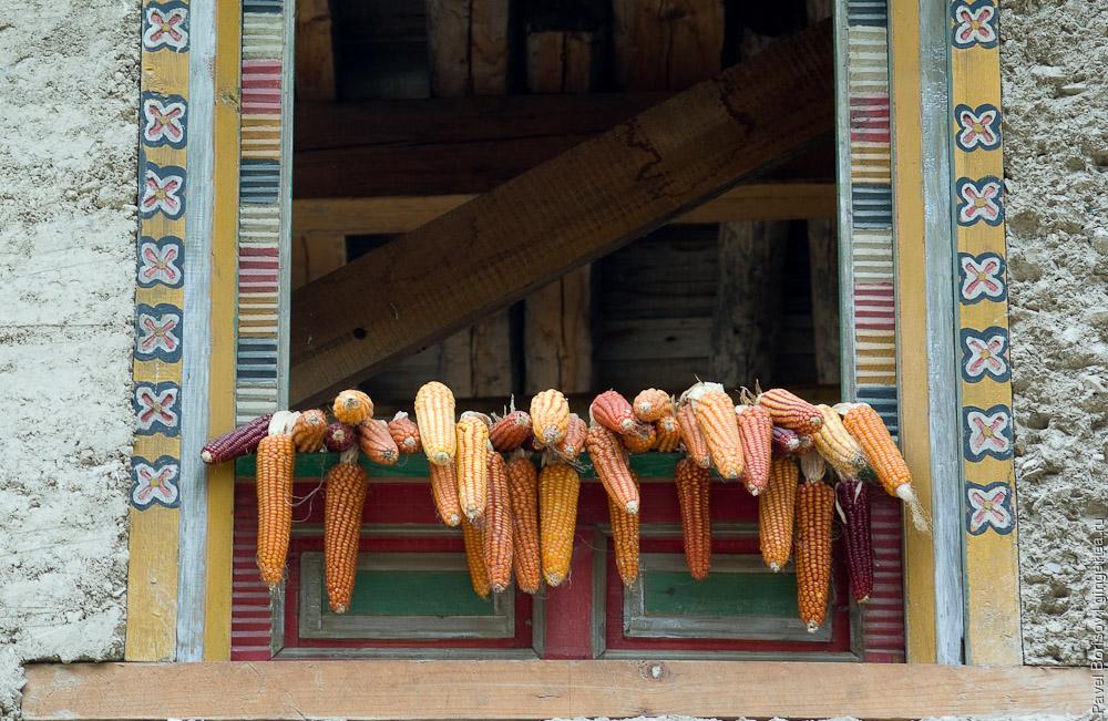 Урожай кукурузы. Салуин. Юньнань. Китай