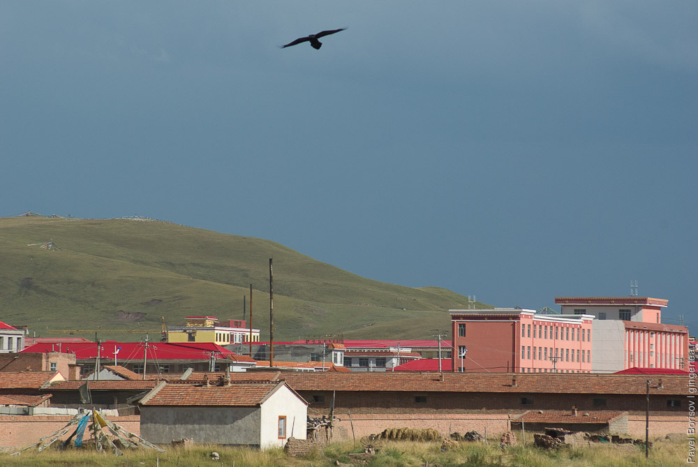 ворона над окраиной города Мачин, a raven near Machen