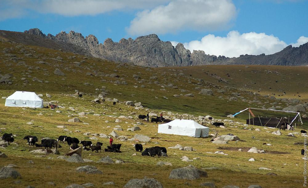 Стойбище тибетских пастухов-кочевников