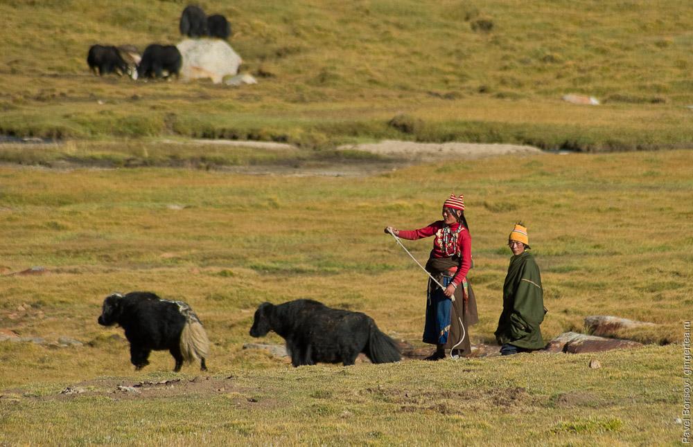 Пастухи-тибетцы