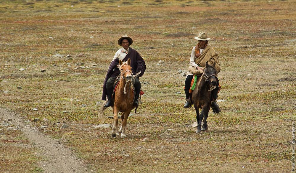 верховые тибетцы