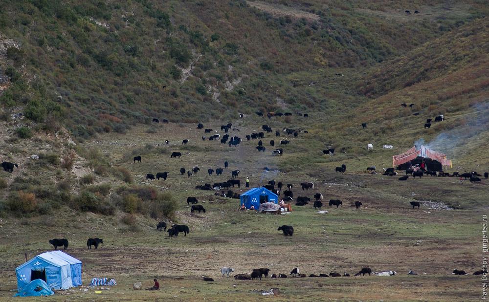 Новые китайские непромокаемые палатки пользуются популярностью среди тибетских пастухов