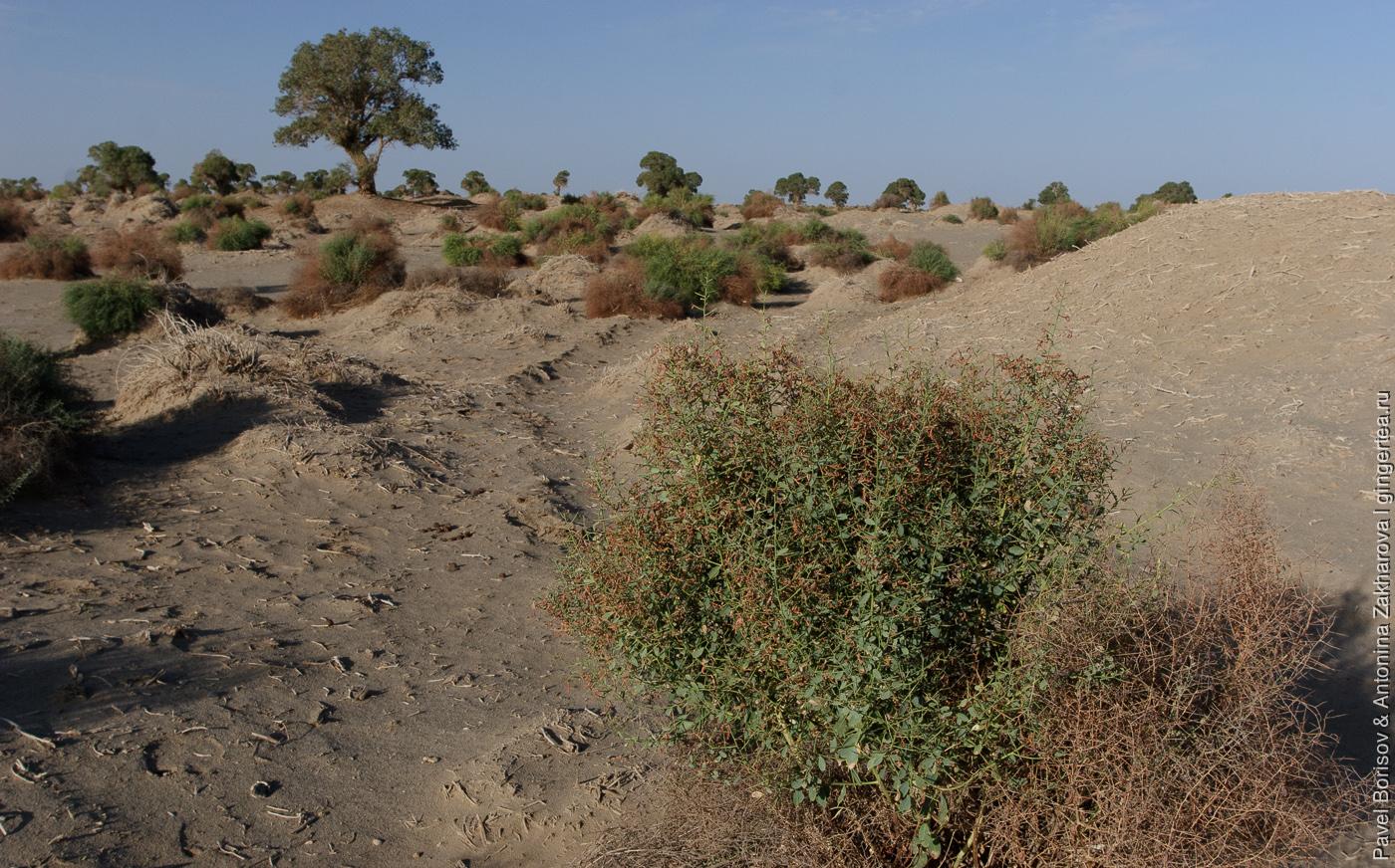 Песчаная буря в пустыне Такла Макан