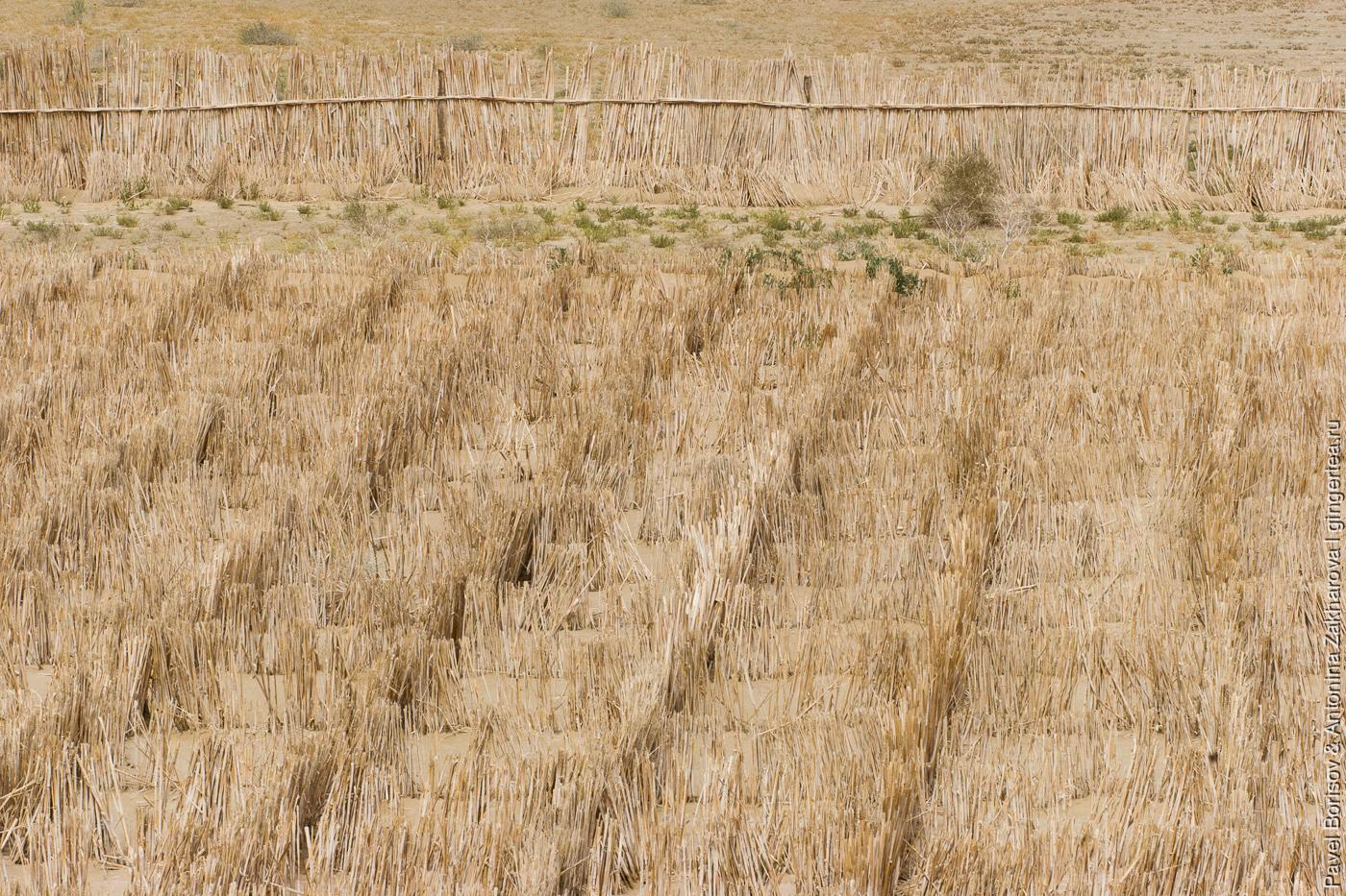 укрепление песка в пустыне, Китай