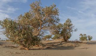 Песчаная буря в пустыне Такла-Макан