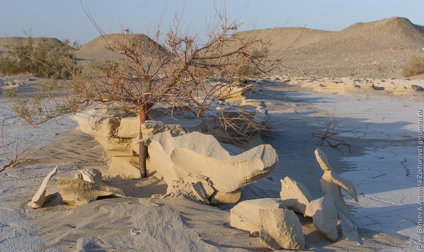 песчаные грибы в пустыне Такла-Макан
