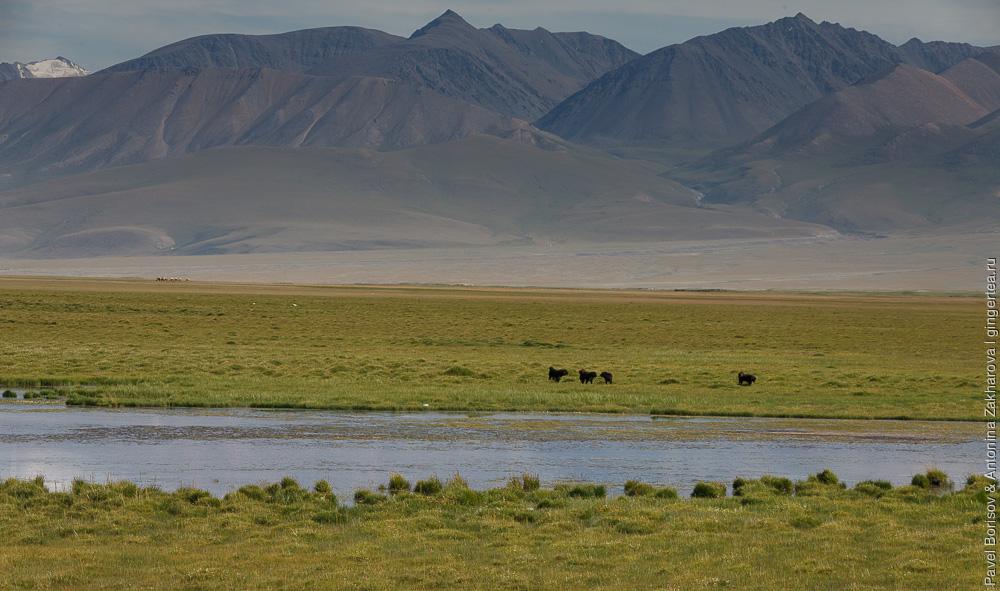 кочкарное болото в Китайском Тянь-Шане