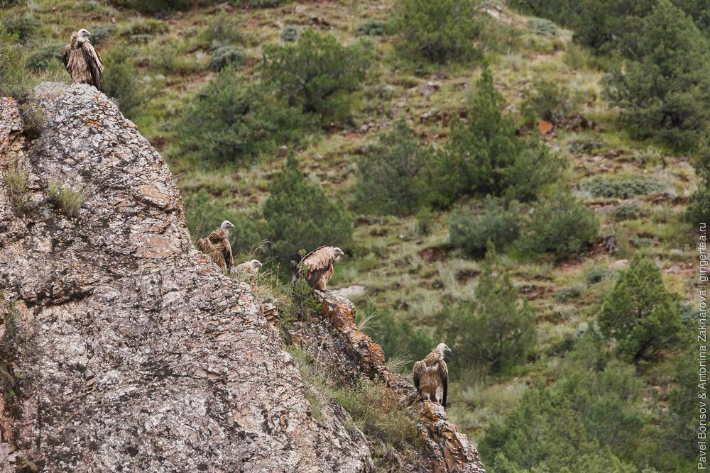 грифы на скале