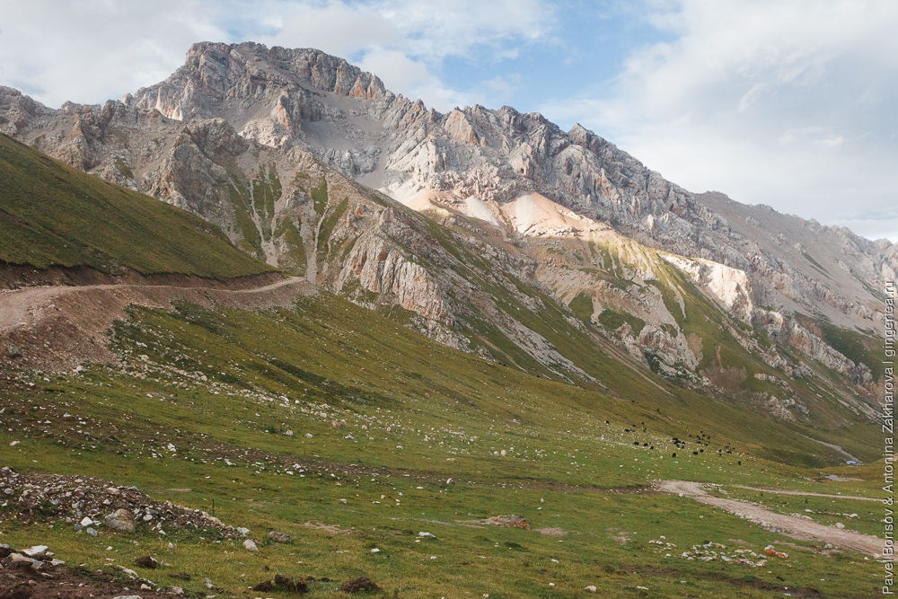 яки пасутся вдалеке в Тибете
