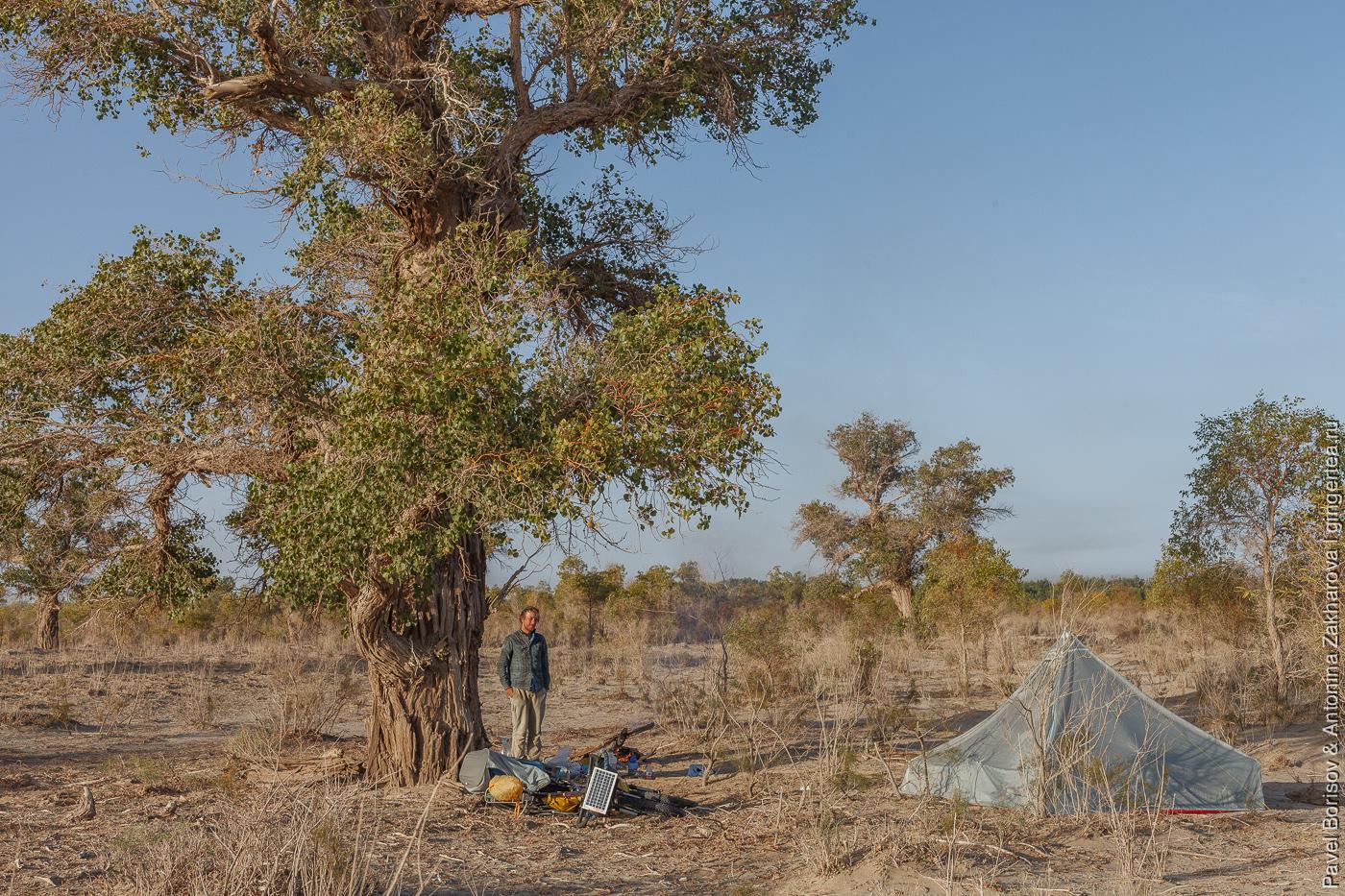 палатка в пустыне среди разнолистных тополей
