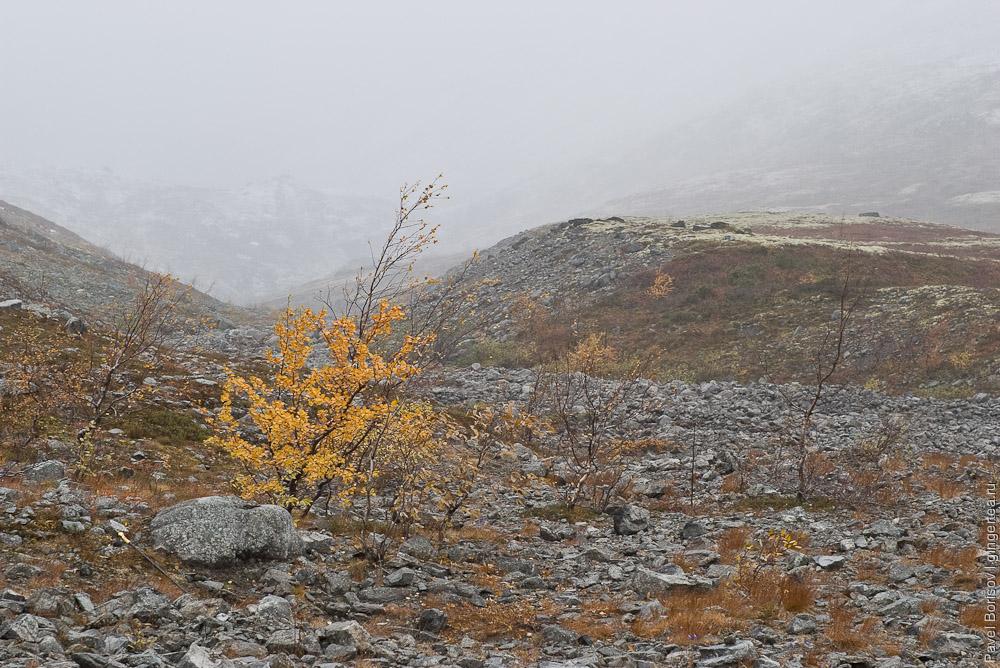 В поисках утраченных леммингов. Осенний поход в Хибины