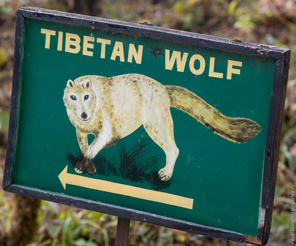 Кто живет в Гималаях или с фотоаппаратом по сиккимскому зоопарку