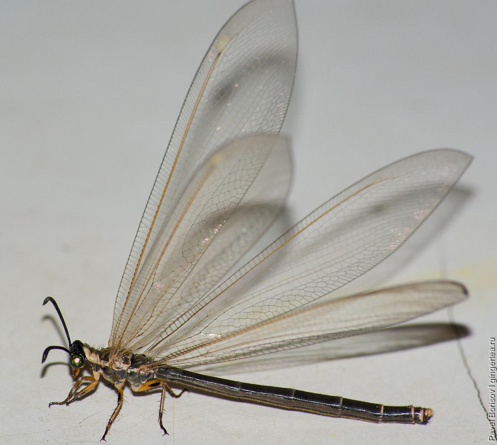 стрекоза, dragonfly