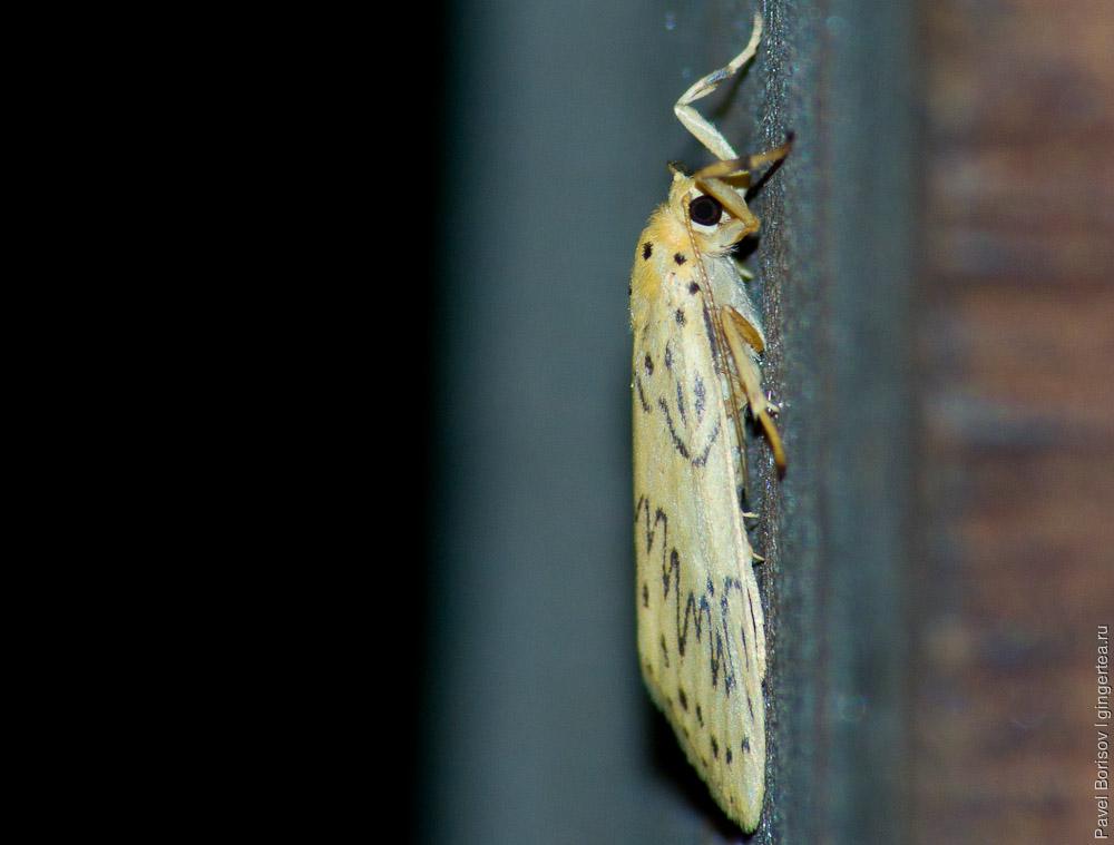 Фауна вокруг нашего дома в долине Куллу: насекомые и членистоногие