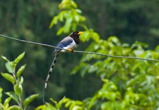 Фауна вокруг нашего дома в долине Куллу, беспозвоночные, птицы, млекопитающие
